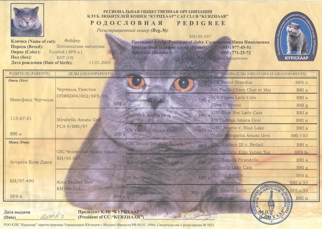 Как сделать документы породистого кота